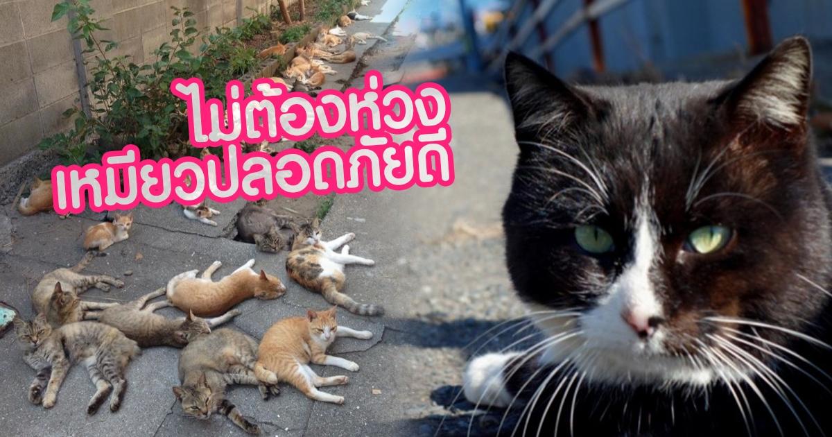 แมวบนเกาะแมวปลอดภัย ญี่ปุ่นช่วยอพยพ ก่อนไต้ฝุ่นฮากิบิสจะมา
