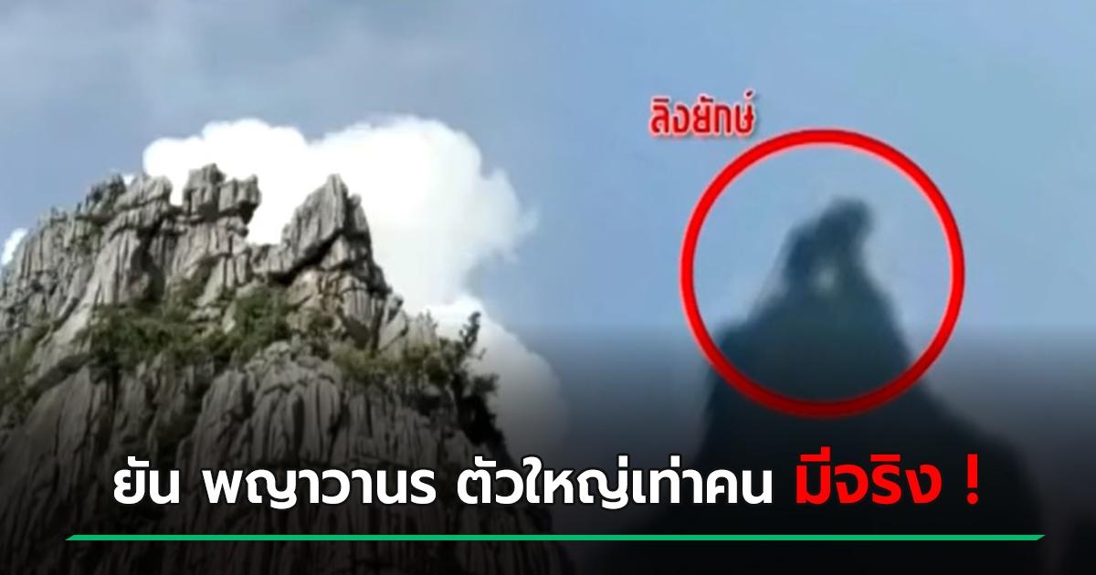 พญาวานร ลิงยักษ์ นครสวรรค์ ลิงใหญ่เท่าคน คนจับภาพได้ ยืนจังก้าบนภูเขา