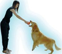 ฝึกสุนัข