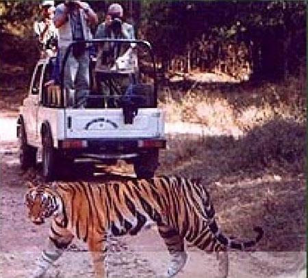 Taj Safari Resort, Mahua Khoti ประเทศอินเดีย