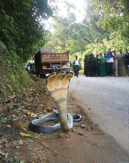 งูสามหัว