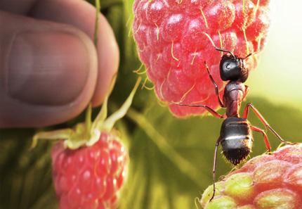 A Bug's Life06