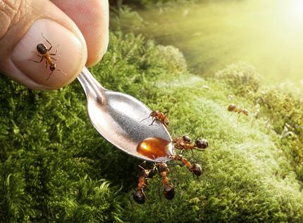 A Bug's Life07