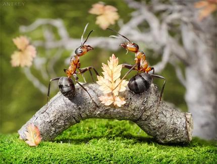 A Bug's Life13