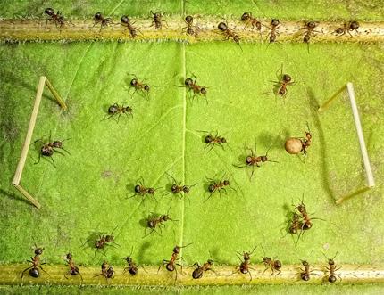A Bug's Life04