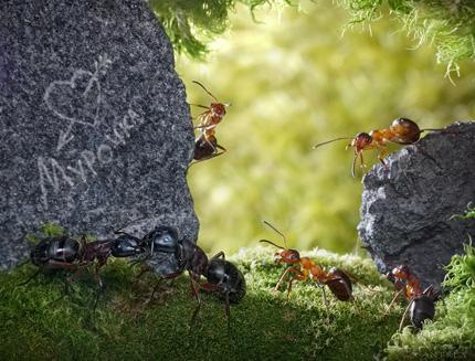 A Bug's Life05