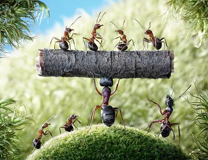 A Bug's Life10