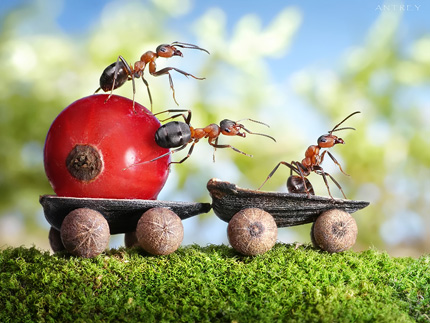 A Bug's Life11