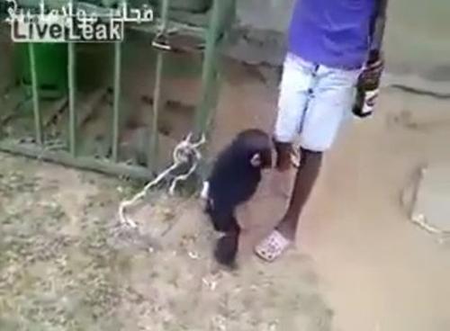 Гифка обезьяна с гранатой, валентиной картинка картинки
