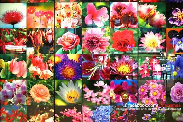 ภาพดอกไม้ทั้งหมด 42 ภาพ มาจากเพื่อนๆชาวพันทิพที่ช่วยส่งภาพกันเข้ามา นับเป็นความภูมิใจของพวกเราชาวพันทิพที่ได้นำภาพดอกไม้สวยๆไปอวดสายตาคนทั่วโลก  ขอย้ำอีกทีนะครับ สำหรับเพื่อนๆที่มีภาพสวยๆ อย่าเก็บไว้คนเดียว ส่งผลงานภาพในคอนเซปเหล่านี้ งานประเพณีไทย Festival, ภาพเส้นสายของการเดินทาง Transportation ในประเทศไทย มาที่ intrawuts@hotmail.com ภาพที่ได้รับการคัดเลือกจะได้ถูกนำไปตกแต่งที่ห้องน้ำใหม่ของท่าอากาศยานสุวรรณภูมิ