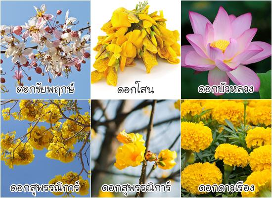ดอกไม้ประจำจังหวัด