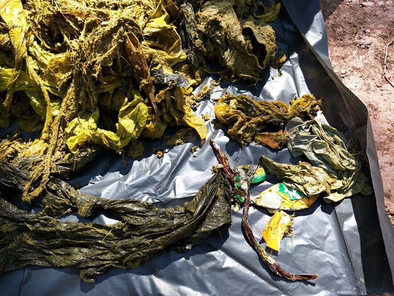 ช็อก กวางป่าตาย ผ่ากระเพาะมีแต่ถุงพลาสติก ทำทางเดินอาหารอุดตัน | News by The Thaiger