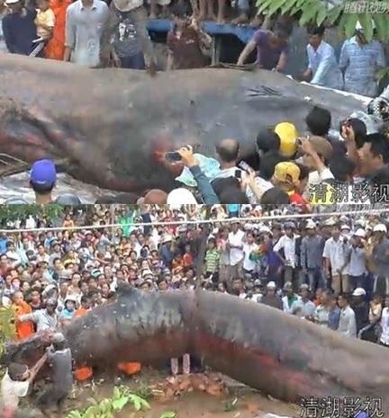 สัตว์ประหลาดขนาดยักษ์ ปรากฏตัวที่เวียดนาม ชาวเน็ตสงสัย ตัวอะไร?