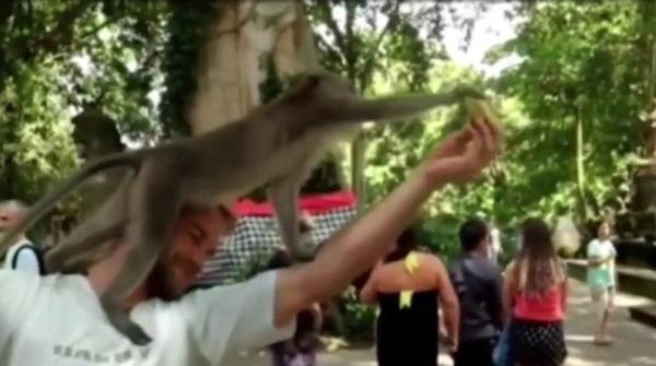 ลิงมีเซ็กส์บนหัว