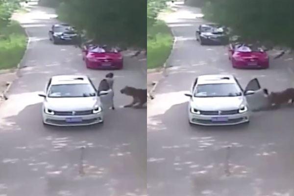 นักท่องเที่ยวถูกเสือขย้ำ