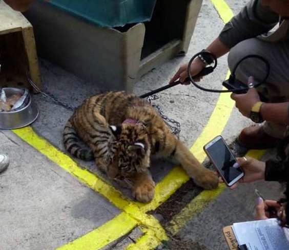 ลูกเสือ