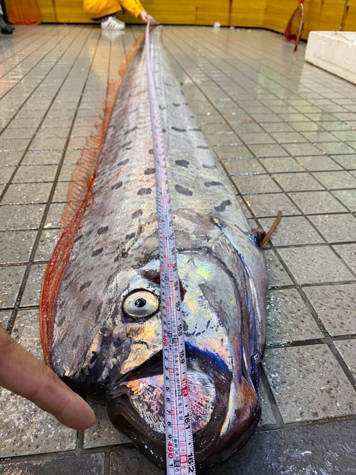 ปลาออร์ฟิช