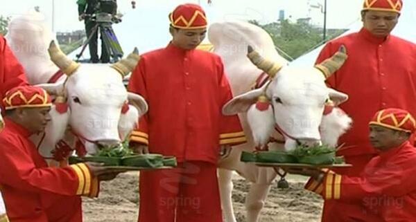 พระราชพิธีพืชมงคล จรดพระนังคัลแรกนาขวัญ 2557
