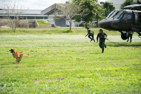 การฝึกสุนัขทหาร