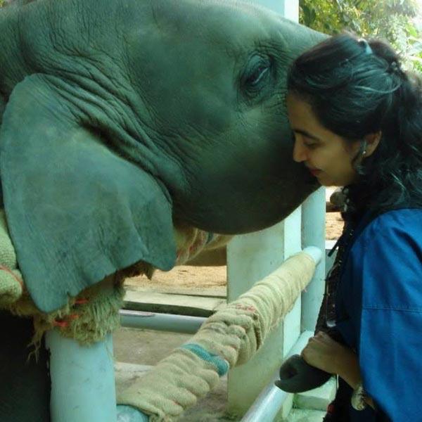 มูลนิธิเพื่อนช้าง
