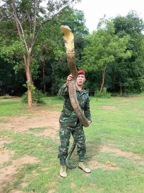 ทหารจับงู
