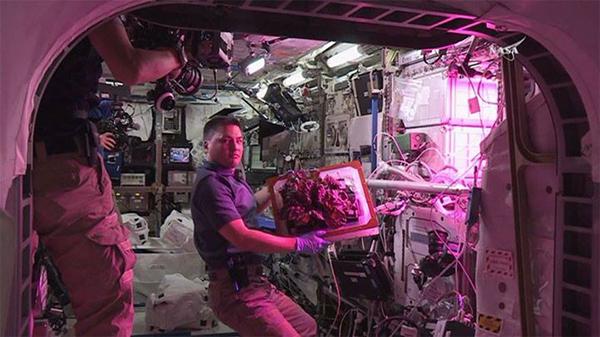 ปลูกผักในอวกาศ