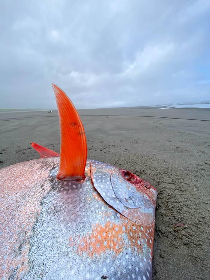 ปลาประหลาด