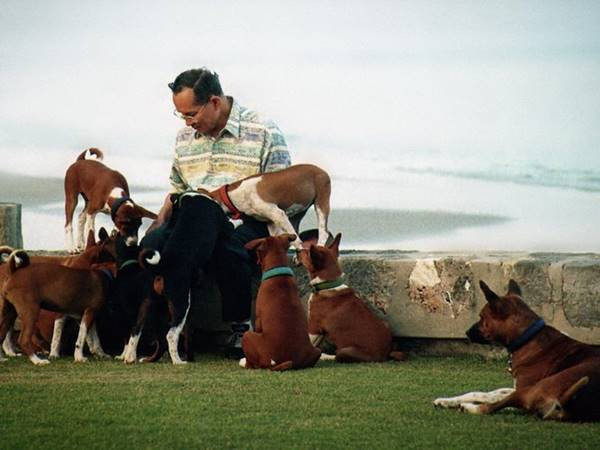 รวมภาพหาชมยาก ในหลวง ทรงฉายภาพกับสุนัขทรงเลี้ยง