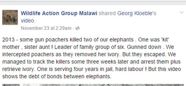 สุดสะเทือนใจ ช้างกลุ่มนี้พยายามปลุกเพื่อนให้ฟื้น หลังถูกฆ่าเอางา