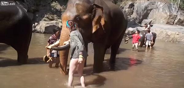 ช้างทำร้ายนักท่องเที่ยว