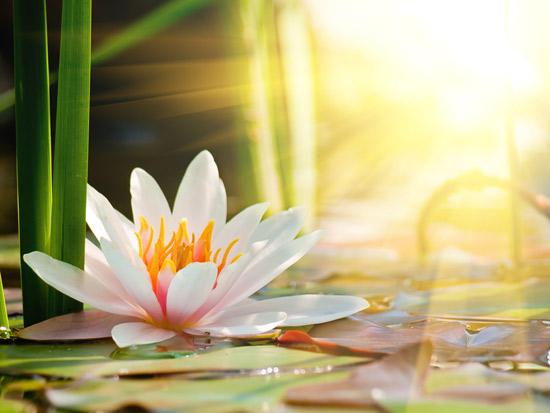 10 ดอกไม้ประจำชาติอาเซียน มีอะไรบ้าง...มาดูกัน