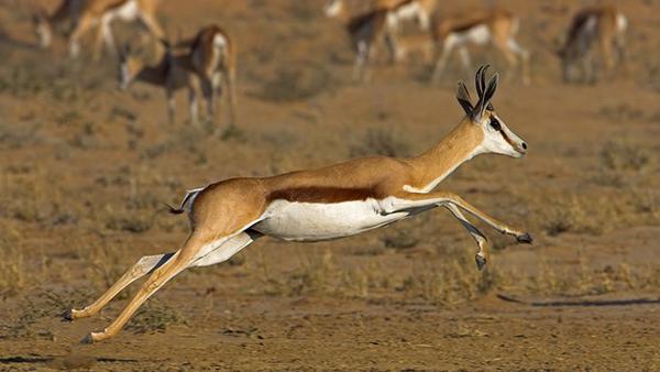 นี่คือโฉมหน้าของ 10 อันดับสัตว์ที่วิ่งเร็วที่สุดในโลก เร็วแค่ไหนไปดู