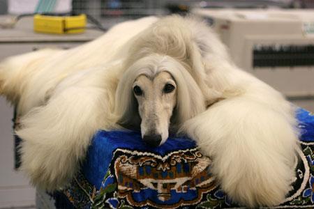 Image result for น้องหมา พันธุ์ต่างประเทศ