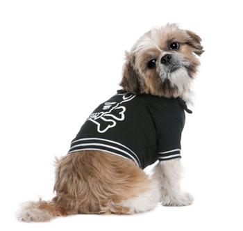 แฟชั่นเสื้อผ้าสุนัข